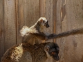 Foto: Daniel Koleška - Zoopark Zájezd