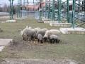 teplarna-ovce-1