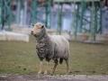 teplarna-ovce-10