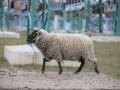 teplarna-ovce-11