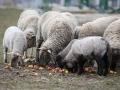 teplarna-ovce-2