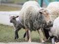 teplarna-ovce-3