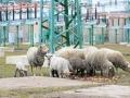 teplarna-ovce-4