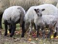 teplarna-ovce-5