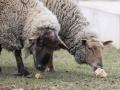 teplarna-ovce-6