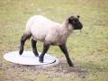 teplarna-ovce-7