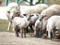 teplarna-ovce-8