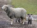 teplarna-ovce-9