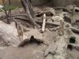 Oblíbená africká šelmička surikata (Foto: KL)q