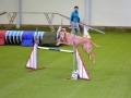 Kladenští kynologové pokřtili o víkendu novou halu mezinárodními závody (Foto: Jitka Krňanská)